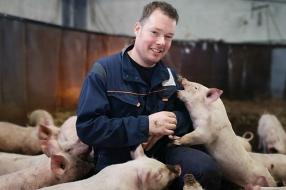 Varkens leven als één familie in de proefstal van boer Ivo: op zoek naar gelukkigere varkens